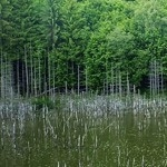 Lacul Cuejdel sau Lacul Crucii – Judetul Neamt
