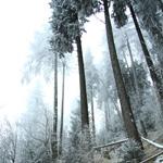 Traseu de Hiking: Izvorul Muntelui – Cabana Dochia (Masivul Ceahlau)