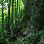 Istoria pustnicilor din pădurile Sihlei