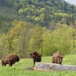 Descoperă frumusețile Parcului Natural Vânători Neamț