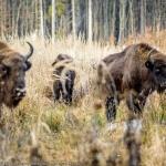 Ţinutul Zimbrului din Neamț, descoperit de pasionații de fotografie