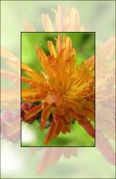 Flora Parcului National Ceahlau