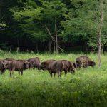 Parcul Natural Vânători - ținutul zimbrului