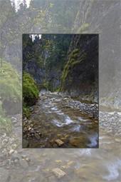 Drumetii in parcurile naturale din judetul Neamt