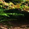 Cracaul Negru Lacul Cuejdel