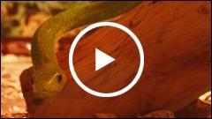 Expozitie de reptile vii la Piatra Neamt