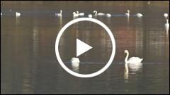Spectacol faunistic pe lacurile din judetul Neamt