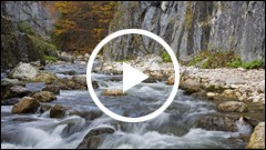 Monumente ale naturii in judetul Neamt