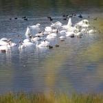 Arii protejate – Lacurile Vaduri și Pângărați
