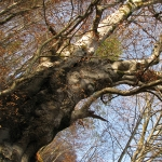 Flora Muntilor Tarcau – judetul Neamt