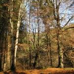 Muntii Tarcaului – judetul Neamt