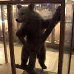 Muzeul Zoologic C Romanescu – Poiana Teiului