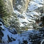 Iarna in Cheile Sugaului