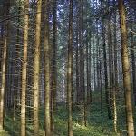 Marcaje turistice în Parcul Natural Vânători Neamţ