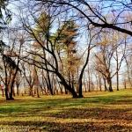 Toamna în parcul Conacului Styrcea, comuna Văleni