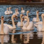 Momente unice pe lacurile din Neamț