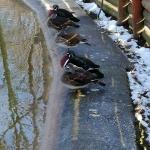 Urme de iarnă în Parcul Municipal Roman