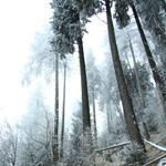 traseu-trekking-ceahlau-carpati-neamt