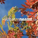 Viziteaza Neamt Banner