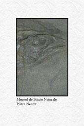 Muzeul de Stiinte ale Naturii din Piatra Neamt