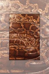 Expozitia reptile vii in Piatra Neamt