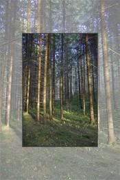 Parcuri naturale - locuri de relaxare