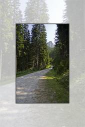 Trasee in Ceahlau: Curmatura Stanile