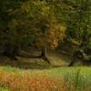 Culori ruginii pe Valea Secului