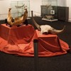 Expozitie de mamifere preistorice in Piatra Neamt