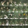 Expozitia de pasari de la Muzeul de Stiinte Naturale din Piatra Neamt