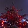 Lumini de decembrie 2013 in Piatra Neamt