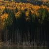Toamna la Lacul Cuejdel 2012