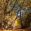 Toamna in rezervatia de stejari Dumbrava 2012