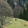 Traseu Montan Tarcau-Brates Vf Batca Rachitei