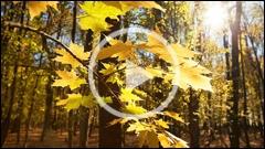 Toamna in Rezervatia de Stejari Dumbrava